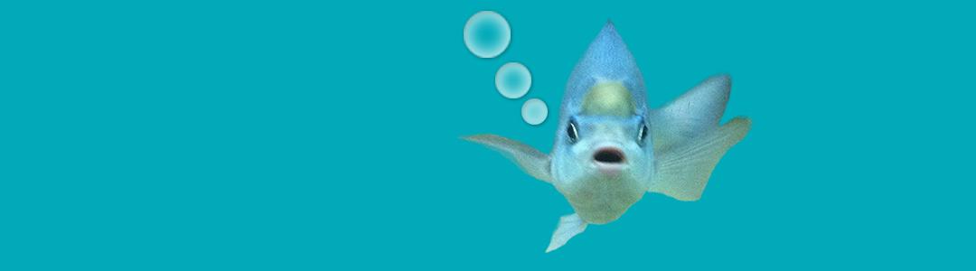 fowey aquarium cornwall bottom of tank image