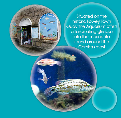fowey aquarium cornwall fowey attraction