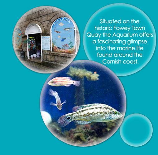 fowey aquarium cornwall fowey attraction